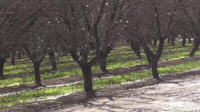Trabajadores del campo en California no han podido laborar debido a las condiciones climáticas