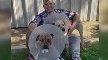 Los perros atacados con un hacha en Bakersfield ya están en camino de su recuperación total