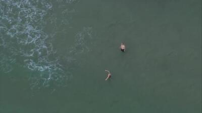Tiburón ataca a un niño en una playa de Fort Lauderdale