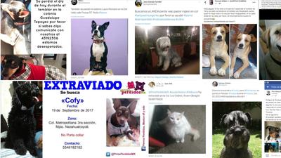¿Qué está pasando con las mascotas tras el terremoto de México?