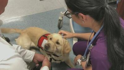 Tres perritos se suman a la ayuda para brindar asistencia a los rescatistas de El Paso