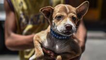 Niño de siete años baña perros para pagarse la carrera que quiere estudiar: veterinario