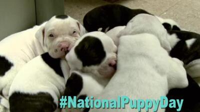 Marzo 23: Día Nacional de los Cachorros