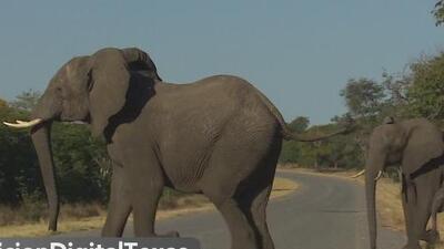 Hoy es el Día Mundial del Elefante