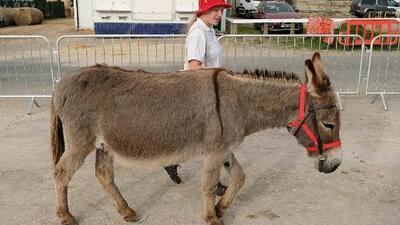 Conoce la nueva terapia con burros para liberar el estrés