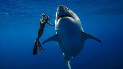 El impresionante encuentro entre unos buzos y el que podría ser el tiburón blanco más grande del mundo
