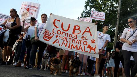 Cubanos marchan contra el maltrato animal en una inusual manifestación civil en la isla