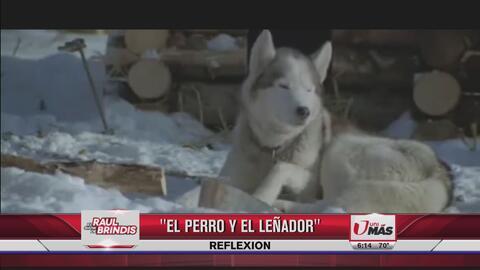 Reflexión: El perro y el leñador