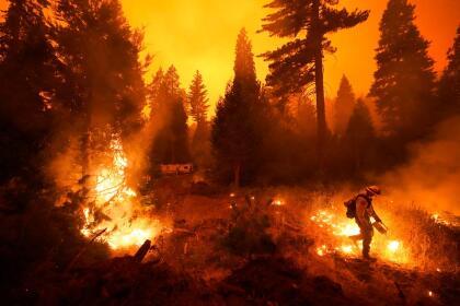 En esta imagen el bombero hispano, Ricardo Gómez, del equipo de San Benito Monterey Cal Fire, enciende una quemadura controlada con una antorcha de goteo mientras combate el incendio Creek en el condado de Fresno. <br>