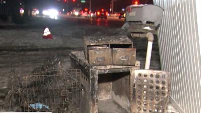 Buscan apoyo para Garrett Mercado, dueño del albergue donde murieron 29 perros