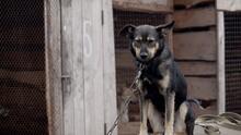 """""""Abbott odia a los perros"""": texanos reclaman en redes al gobernador por vetar medida contra crueldad animal"""