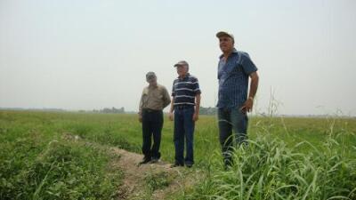 Menos alimentos para los venezolanos: se apaga la producción de arroz y maíz