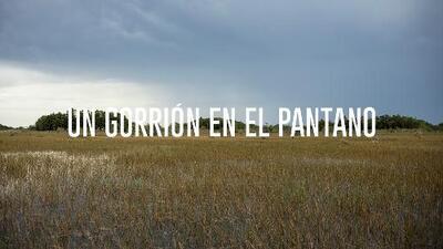 Un Gorrión en el Pantano: Cultura y extinción en el Río de Hierba