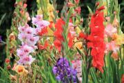 Las flores son un detalle perfecto lleno de simbolismos