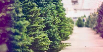 Las mejores granjas locales para comprar un árbol de Navidad en el Valle de Delaware