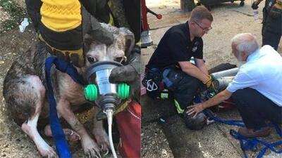 Bomberos de Evanston rescataron a cuatro mascotas tras un incendio