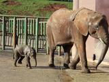 La trágica muerte de un trabajador de un parque natural tras ser golpeado por un elefante