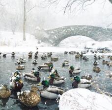 NY amanece totalmente blanca por tormenta de nieve