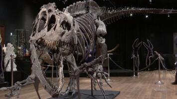 Subastan por más de 3 millones dólares el esqueleto de un dinosaurio de 150 millones de años
