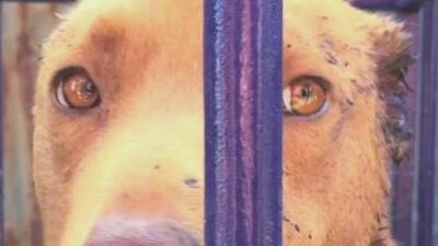 Los graves casos de maltrato animal en Guatemala fuerzan a las autoridades a aprobar una ley de protección