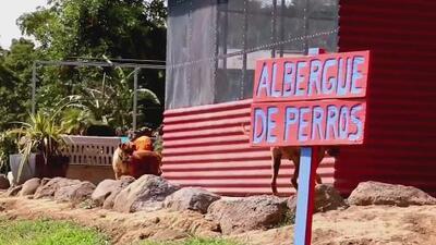 Territorio de Zaguates, el paraíso para los perros abandonados en Costa Rica