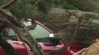 Árboles caídos, vehículos y viviendas afectadas: los cuantiosos daños en Denton tras el paso de un tornado