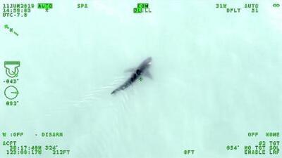 Un tiburón blanco obliga a alguaciles del norte de California a cancelar un entrenamiento acuático