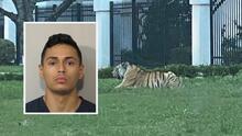 La policía arresta al dueño del tigre que deambuló por las calles de Houston