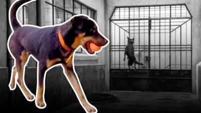 Él es Borras, el perro de la película 'Roma' cambió el hambre y las enfermedades de la calle por la fama mundial
