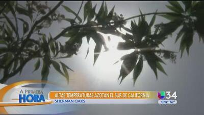Recomendaciones para protegerse de la ola de calor en California
