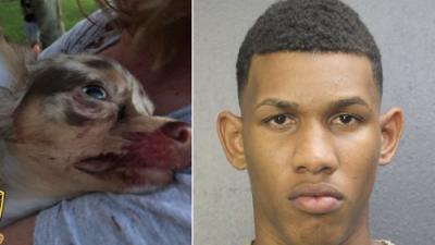 Arrestan a un hombre por matar con un rifle desde su balcón a la perrita de una niña de 8 años