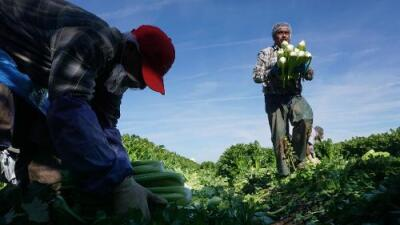 Decenas de campesinos mexicanos llegaron a California engañados pagando miles de dólares por visas de trabajo