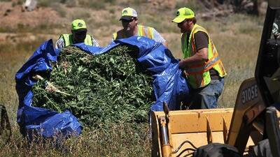 La DEA busca contratista que queme marihuana decomisada y llueven personas que se ofrecen a hacerlo (hasta gratis)