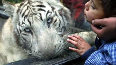 ¿Deben las ciudades cerrar sus zoológicos?