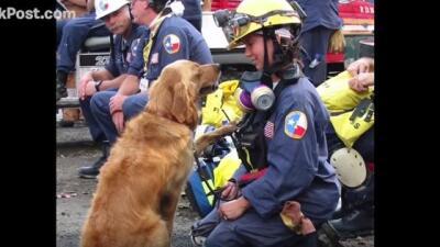 Riden honor a heroína canina del 9/11