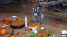 Los animales de Brookfield disfrutan de su comida de Acción de Gracias