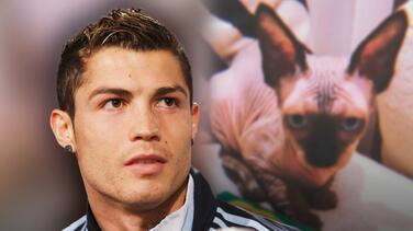El multimillonario Cristiano Ronaldo no escatima en gastos para salvar a su exótico gato 'Pepe'