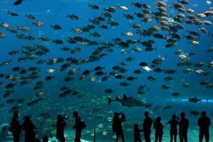 """Y aunque el Acuario Nacional en Baltimore planea cerrar hasta el 27 de marzo, transmitirá en vivo en su sitio web varias de sus exhibiciones, incluyendo  <a href=""""https://www.aqua.org/Experience/live#btr"""" target=""""_blank"""">Blacktip Reef</a> y  <a href=""""https://www.aqua.org/Experience/live#pcr"""" target=""""_blank"""">Pacific Coral Reef</a>."""