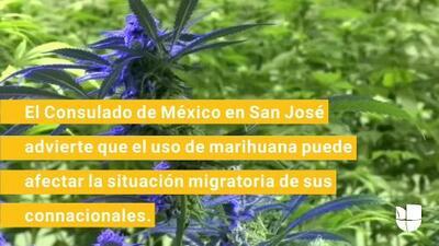 """""""No fumes marihuana"""", el mensaje que el Consulado envía a los mexicanos en la Bahía"""