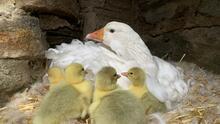 Madres novatas: Zoológico de Filadelfia presume las primeras crías de algunos de sus animales