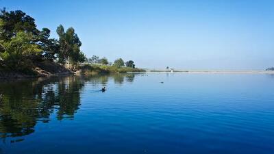 Hombre se contagia con ameba 'come cerebros' luego de nadar en lago de Broward
