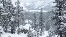 A partir del 8 de febrero, para ingresar al Parque Yosemite deberás reservar con anticipación