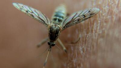 Por qué los recortes a las investigaciones sobre cambio climático ponen en riesgo la lucha contra la malaria