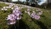 Con la llegada de marzo, inicia la primavera meteorológica: aquí te decimos de qué se trata