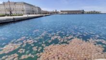 Una invasión inesperada: miles de medusas invaden la costa italiana