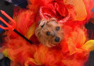 Los perros de Nueva York (y sus dueños) saludan así a Halloween