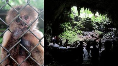 """""""Con tantos chavos que se malbaratan aquí"""": Permanecerán cerradas las Cavernas de Camuy y el zoológico por falta de dinero"""