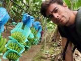 Danilo Carrera cuenta cómo le va lejos de la TV cosechando bananos en su Hacienda Mami Bella