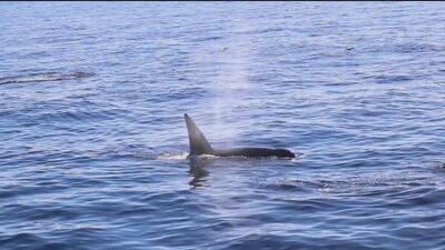 Los cautivadores avistamientos de ballenas que se disfrutan todo el año en el sur de California