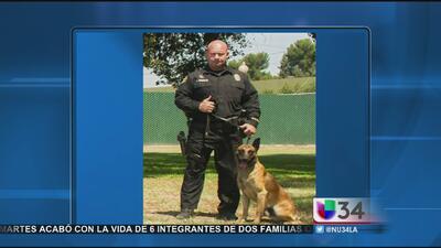 Muere perro policía en tiroteo en Long Beach